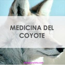 Coyote Iniciación