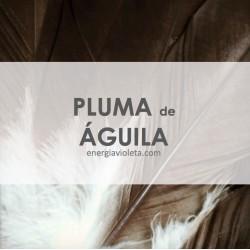 PLUMA DE ÁGUILA - 35 cms aprox.